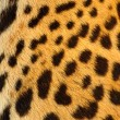 Leopard skin — Stock Photo #6880853