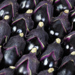 Stock Photo: Egg plants