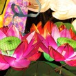 Lotus lantern for mid autumn festival — Stock Photo #6881819