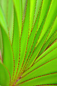 Green leaf as background — Foto de Stock