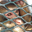 Sad monkey in cage — Stock fotografie