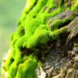 Green Moss — Stock Photo #6958853