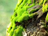 绿色的青苔 — 图库照片
