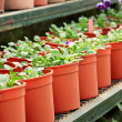 Stock Photo: Potted plants
