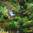 Water spring in jungle — Stock Photo #7025373