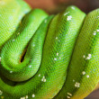 Green snake — Stock Photo #7025486