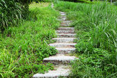 Path in country side — Stock Photo