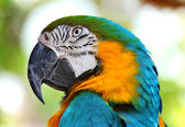 Coloured Macaw parrot — Stock Photo