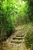 Path in bamboo forest — Stock Photo