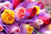 Colourful rose — Stock Photo