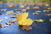 The sheet of a maple, lying on the earth. — Stock Photo
