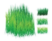 Grass vector — Stock Vector