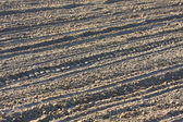 Farm, the furrow in the earth are parallel — Stock Photo