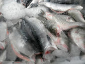 Frozen in a block of Ice Fish — Stock Photo