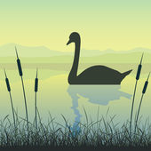 Swan on Lake — Stock Vector