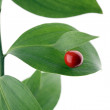 Stock Photo: Red berry on green brunch