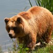 Brown bear — Stock Photo #6848613