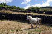 白い馬の牧草地 — ストック写真