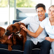 Smiling young couple sitting on sofa with their dogs - Stockfoto