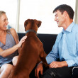 Royalty-Free Stock Photo: Cute young couple having fun with their pet dog