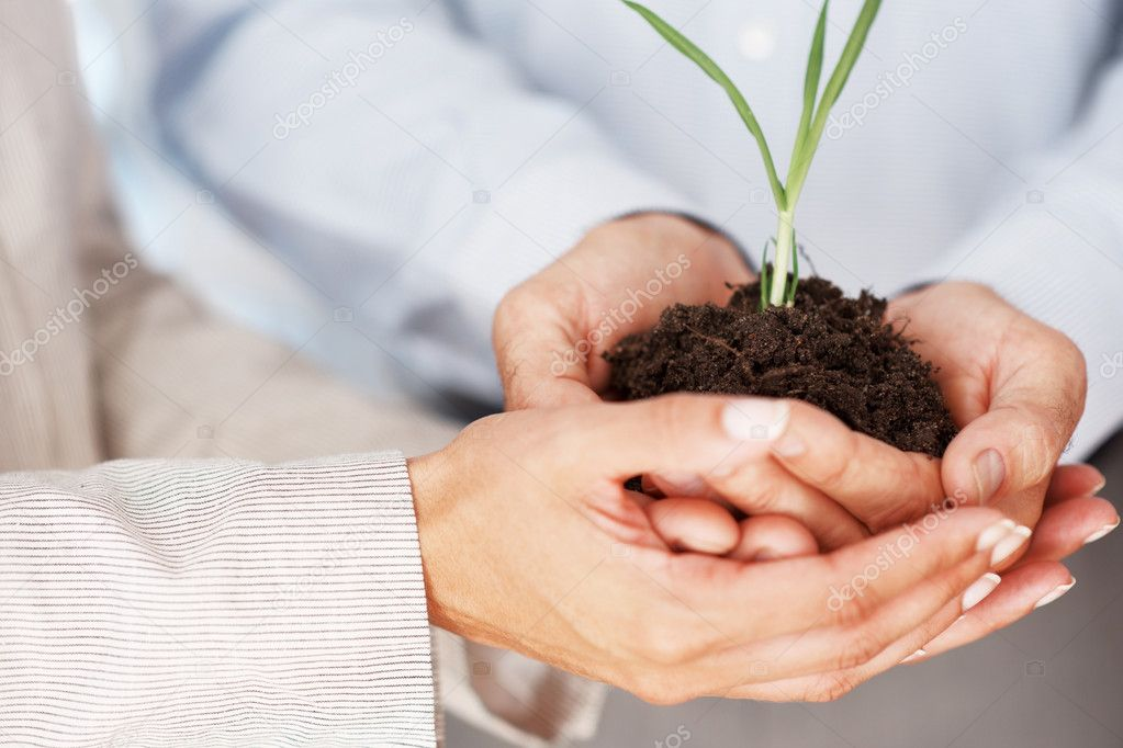 Cropped image of hands of businesspeople together holding a young plant — Stock Photo #7788046