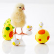 Beautiful image of small chick with easter eggs