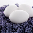 Fresh eggs on the lavender spring flowers - Foto Stock