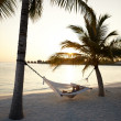 Lady lying on hammock between coconut trees - Stock Photo