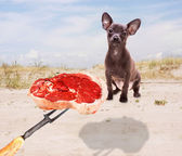 Teasing a Doggy with Titbit — Stock Photo