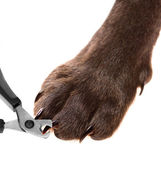 Pets pedicure - claw trimming — Stock Photo