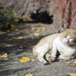 Cat basking — Stock Photo