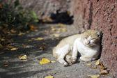 Cat basking — Stock Photo