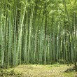 Bamboo forest — Stock Photo #7333973