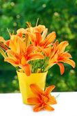 橙群天莉莉 — 图库照片