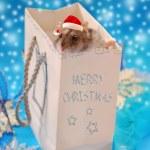 Sweet little hamster for christmas — Stock Photo