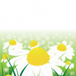 Vector chamomile flowers in the green grass — Stock Vector