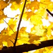 Golden autumn leaves — Stock Photo