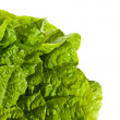 Stock Photo: Fresh salad lettuce