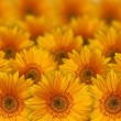 Yellow flowers — Stockfoto #6870912