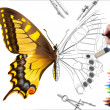 Drawing butterfly — Stock Photo #6870946