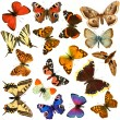 Butterfly group — Stock Photo #6870978