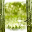Bamboo Border — Stock Photo