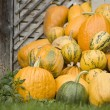 Pumpkins — Stockfoto #6873192