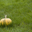 Pumpkin — Stock Photo #6873202