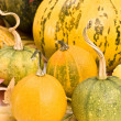 Pumpkins — Stockfoto #6873211