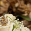 Wedding rings and roses — Stock Photo