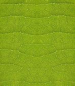 Trama verde foglia — Foto Stock