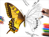 Drawing butterfly — Stock Photo