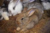 Familia de conejos — Foto de Stock