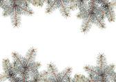 серебряные ветви сосны — Стоковое фото